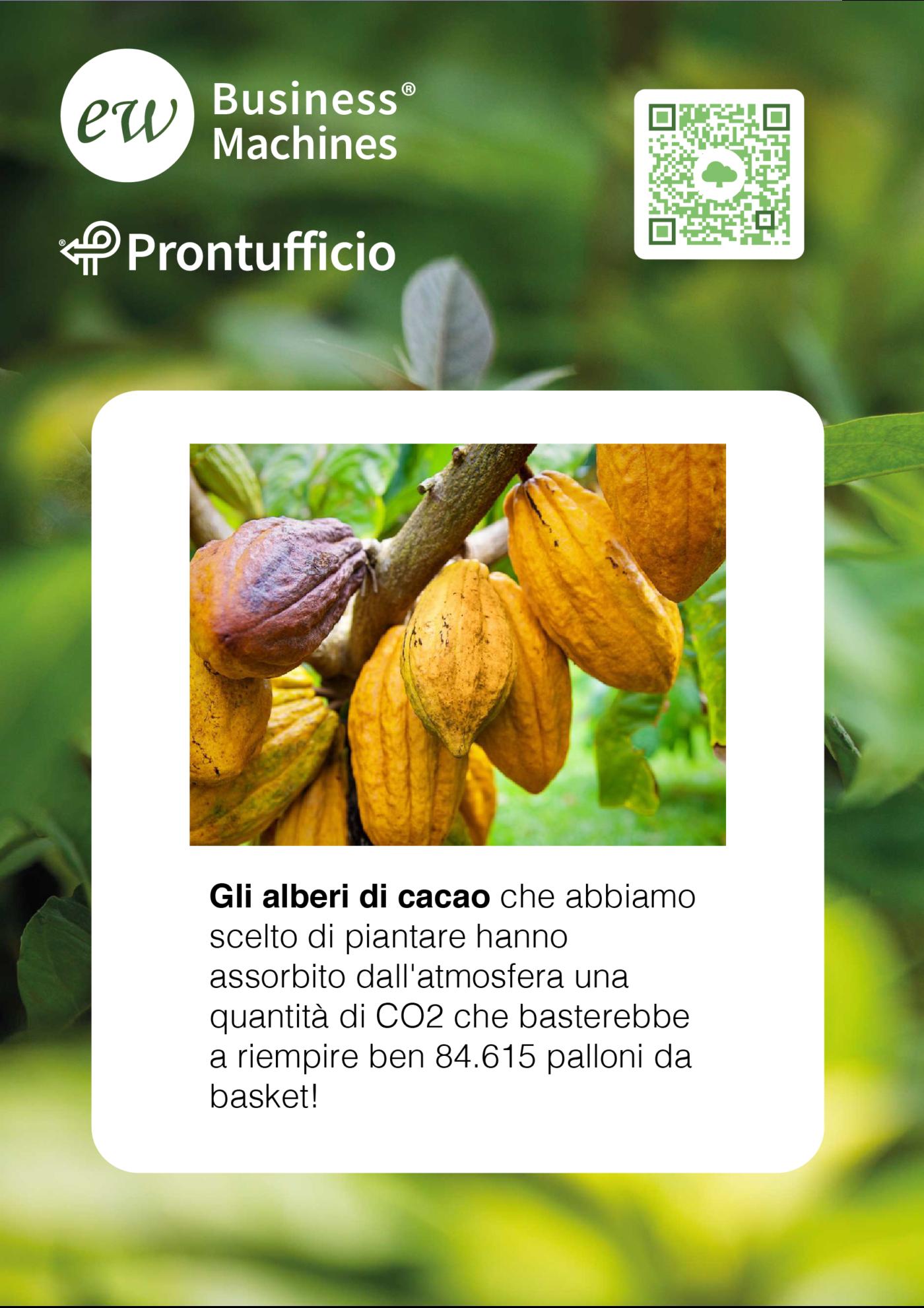treedom albero cacao